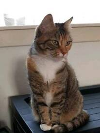 Female neutered cat looking for forever home