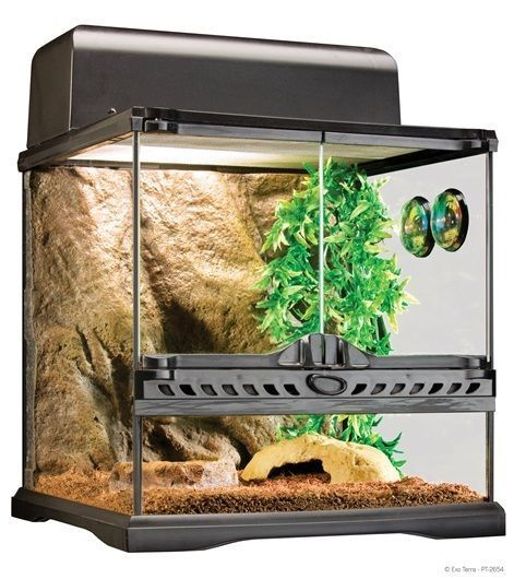 How to Buy Plants for a Terrarium