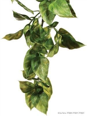 -  Exo Terra Plastic Terrarium Plant Large Amapallo