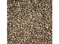 for sale hemp seeds