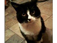 Missing Black/White Cat - Cathays Area CF24