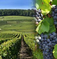 Terre agricole terrain en culture de mais pour vignoble, autre