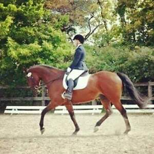 Canadian sport / thoroughbred gelding for part lease