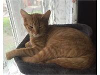 5 months kitten needs forever home