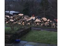 Sycamore logs, approx 3 tonnes. Easy access to uplift