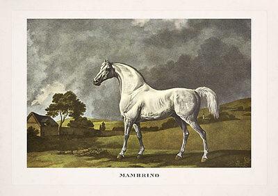 RENNPFERD MAMBRINO von GEORGE STUBBS VOLLBLUT FAKSIMILE 55 auf Büttenpapier