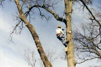 AFFORDABLE TREE CUTTING SERVICES - STUMP GRINDING / REMOVAL
