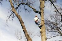 AFFORDABLE TREE CUTTING SERVICES - STUMP GRINDING /STUMP REMOVAL
