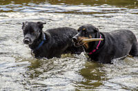 Dog Boarding - all breeds and any needs