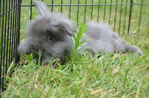 Floofy Bunnies!!!