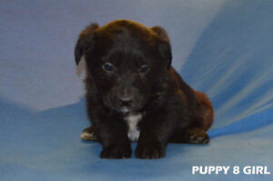 CUTE ADORABLE PUPPIES LOOKING FOR A GOOD  & LOVING HOME!