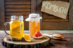 Make Kombucha: Organic SCOBY & Starter (Dundas and University)