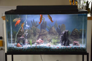 Complete 40 Gallon Aquarium/Fish Tank (PPU by Kelli)