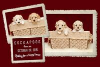 Adorable COCKAPOO Puppies For Sale!!!