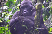 Conservation of Bwindi Impenetrable Forest in Uganda