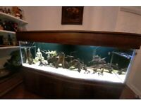 Stunning fish tank and cabinet REDUCED to sell Bargain 0ver £2,000 in equipment