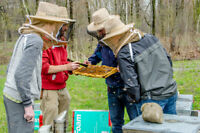 Honey Bees: Two-Day Introductory Beekeeping Course / Workshop