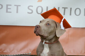 Dog Obedience Classes! Start this fall!