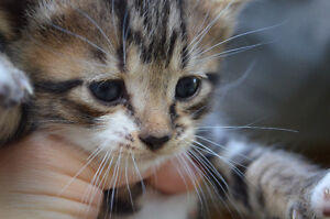 Adorable healthy kittens for sale