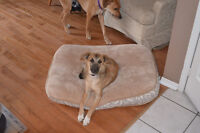 STAR, a mixed breed female rescue puppy