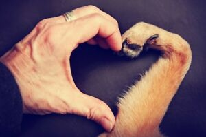 """We can come to your Home to do Euthanasia for you dog or cat """"At"""