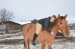 9 Year old gelding Broke and looking for loving home