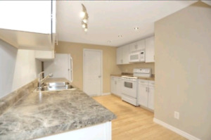 Furnished, renovated 1 bedroom apartment available Nov 1st