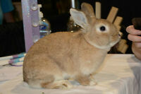 Spayed 3 year old rabbit ~ Selina