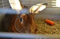 Pair of Rabbits to go to the Perfect home!