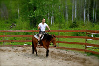 Friendly Gorgeous Registered Quarter Horse Mare