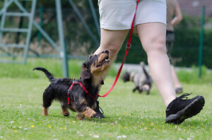 Puppy Class and Beginner Obedience
