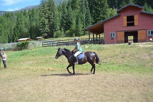 14yr Thoroughbred Mare