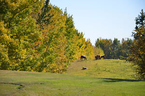 Land for Sale - Your Perfect Country Retreat can be built here!!