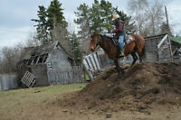 Been there-done-that Ranch BROKE Gelding
