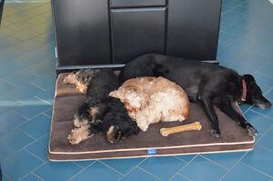 Marcheuse de chien et service de garde d`animaux
