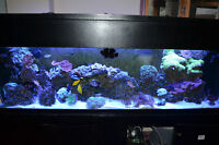 125 gallons reef tank with 20 fishes