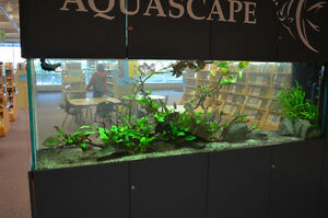fish care and tank maintenance experts!