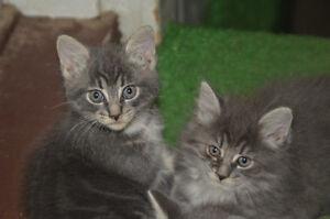 Bébés chat a donner