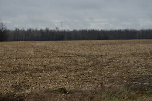 Excellent tile drained farm land for sale Cornwall Ontario image 2