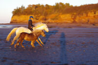Relationship-based Horsemanship Lessons and Training