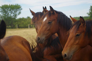 horses-for you!