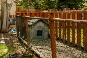 Insulated Dog House and Kennel