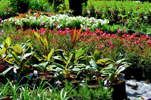 PLANT SALE   QUALITY CHEAP PLANTS DIRECT FROM THE GROWERS NURSERY North Maclean Logan Area Preview