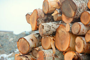 Firewood Factory: Reliable Delivery of Birch & Spruce St. John's Newfoundland image 7