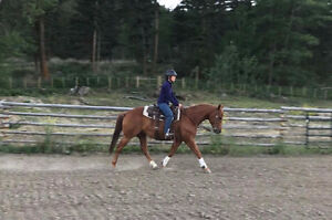 2010 well bred AQHA Mare