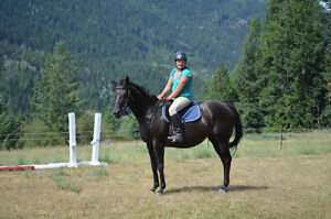14 yr.old Registered THOROUGHBRED MARE