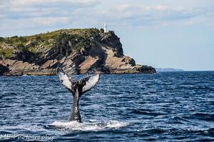 50% OFF EVERYTHING. ME Photography St. John's Newfoundland image 5