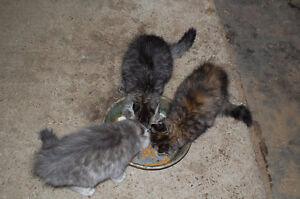 Tres beaux chatons