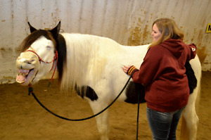 Certified Equine Massage Therapist WILLING TO TRAVEL !!