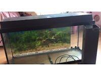 80cm juwel fish tank aquarium
